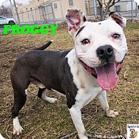 Adopt A Pet :: Froggy - Troy, MI