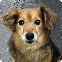 Adopt A Pet :: Angel - Newington, VA