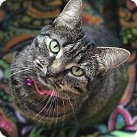 Adopt A Pet :: Sunny - Hanna City, IL