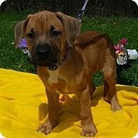 Adopt A Pet :: Gordie-Adopted! - Detroit, MI