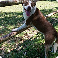Terrier (Unknown Type, Medium) Mix Dog for adoption in Huntington, New York - Gabby - N