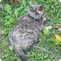Adopt A Pet :: Zena - Troy, OH