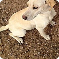 Adopt A Pet :: Lady - Childress, TX