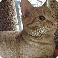 Adopt A Pet :: Tango - Chesapeake, VA