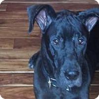 Adopt A Pet :: Poseiden - Albuquerque, NM