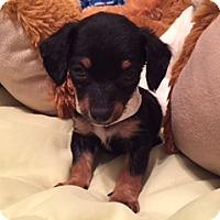 Adopt A Pet :: ROBBIE - Higley, AZ