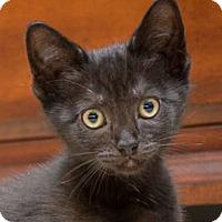 Adopt A Pet :: Tigger - Reston, VA