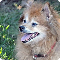 Adopt A Pet :: Jasmine - Georgetown, KY