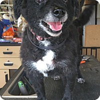 Adopt A Pet :: Socks - Mooresville, NC