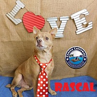 Adopt A Pet :: Rascal - Arcadia, FL