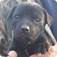Adopt A Pet :: Agnes Wigglebottom - Colonial Heights, VA
