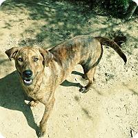 Adopt A Pet :: Jethro - Manchester, NH