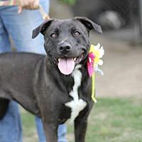 Adopt A Pet :: Venice - Fresno, CA