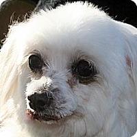 Adopt A Pet :: Wendy - Fort Braff, CA