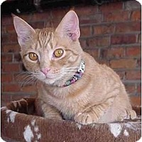 Adopt A Pet :: Lando - Chesapeake, VA