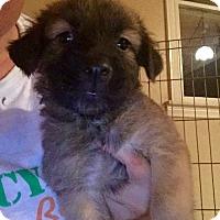 Adopt A Pet :: Karma's Pup 2 - Long Beach, CA