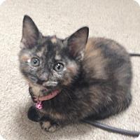 Adopt A Pet :: Elle - Raritan, NJ