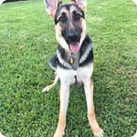 Adopt A Pet :: Kia - Houston, TX