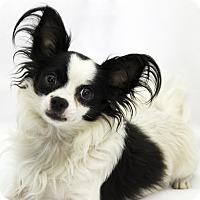 Adopt A Pet :: Riser - Cumberland, MD