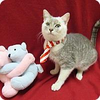 Adopt A Pet :: CUPID - Lexington, NC