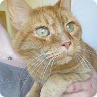 Adopt A Pet :: Murdock - Menomonie, WI
