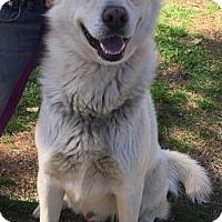 Adopt A Pet :: Spirit meet me 3/31 - Manchester, CT