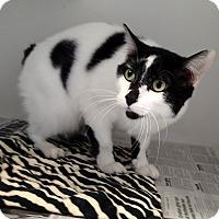 Adopt A Pet :: Moe - Newport, NC