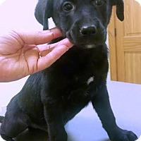Adopt A Pet :: McCain - Kimberton, PA