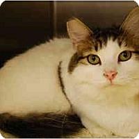 Adopt A Pet :: Rosalia - Modesto, CA
