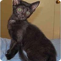 Adopt A Pet :: D3 - Davis, CA