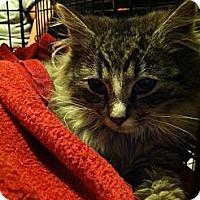 Adopt A Pet :: Amolia - Pittstown, NJ