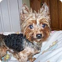 Adopt A Pet :: Dandy - Fremont, CA