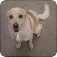 Adopt A Pet :: Lexy - Phoenix, AZ