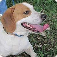 Adopt A Pet :: Willow a.k.a. Willie B. - Albany, NY