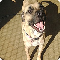 Adopt A Pet :: MILEY - Pompton Lakes, NJ