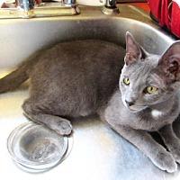 Adopt A Pet :: Jack - Devon, PA