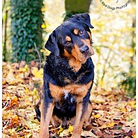 Adopt A Pet :: Rye - Seattle c/o Kingston 98346/ Washington State, WA
