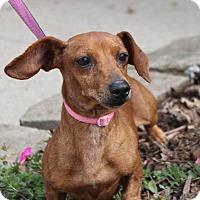 Adopt A Pet :: Tiny - Georgetown, KY