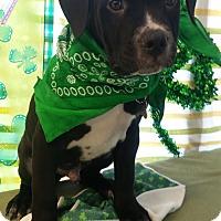 Adopt A Pet :: Sparky - Detroit, MI
