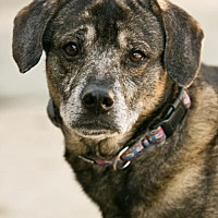 Adopt A Pet :: Scout - Roanoke, VA