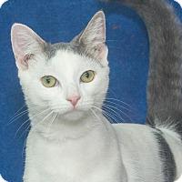 Adopt A Pet :: Simon - Elmwood Park, NJ