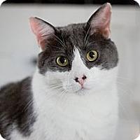 Adopt A Pet :: Deuce - Chicago, IL