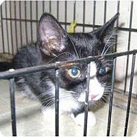 Adopt A Pet :: Usher - Colmar, PA
