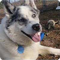 Adopt A Pet :: Brody - Madison, WI