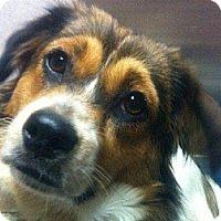 Adopt A Pet :: Molly - Marlton, NJ