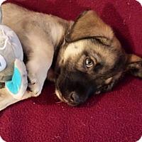 Adopt A Pet :: Leo - Homewood, AL