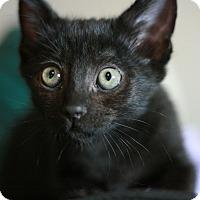 Adopt A Pet :: Eva - Canoga Park, CA