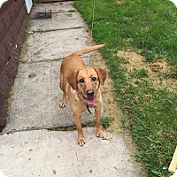 Adopt A Pet :: Teeny - Westminster, MD