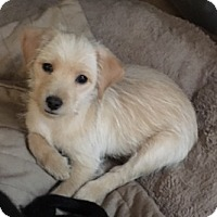 Adopt A Pet :: Taffy-no new applications - Schaumburg, IL