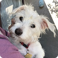 Adopt A Pet :: Princess - Studio City, CA